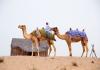 Desert Camels Dubai